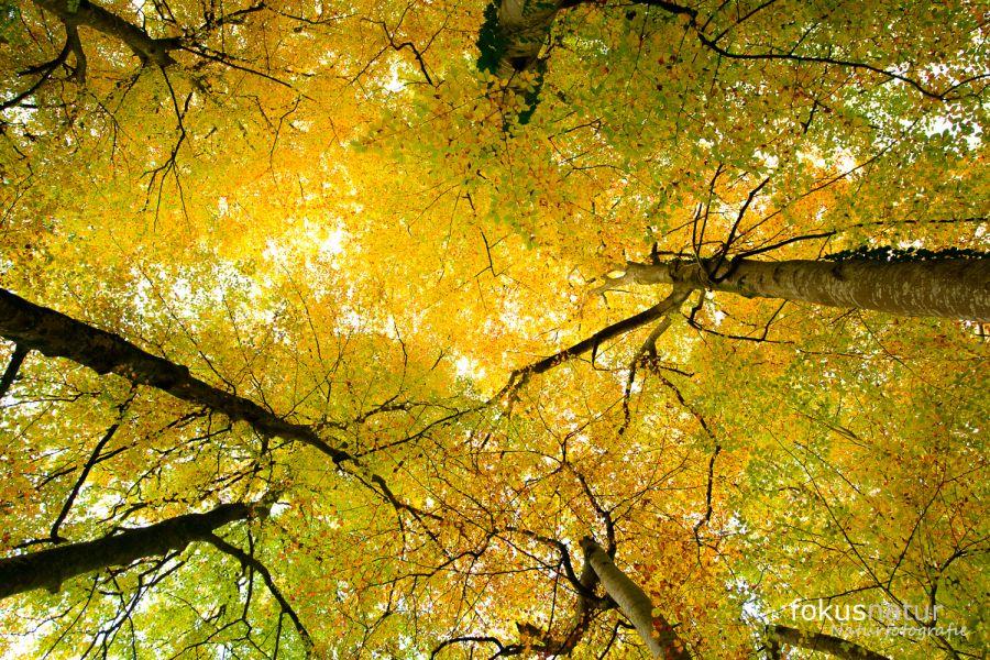 Herbst im Würmtal