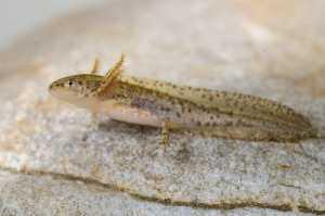 Molche & Salamander