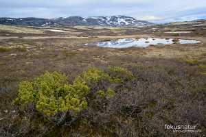 Frühling in Norwegen