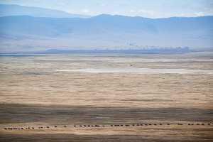 Gnus im Ngorongoro Crater