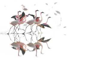 Flamingos am Lake Natron