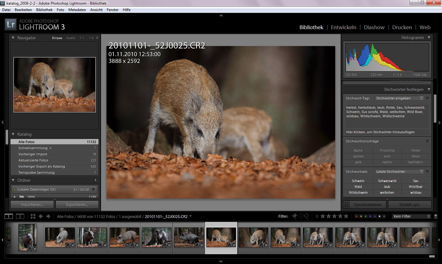 Wild boar in the Lightroom library