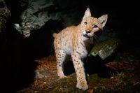 Eröffnung des Lynx-Room