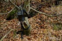 Trailmaster TM1550PS - die beste Lichtschranke für Naturfotografen!